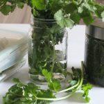 Astuce cuisine : Comment conserver de la coriandre fraîche !